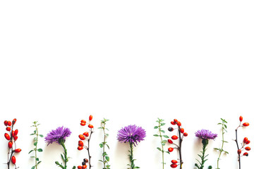 Autumn Background With Purple Flowers And Red Berries