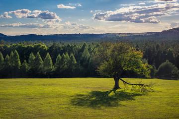 Tree on the meadow in Roztoczanski National Park, Lubelskie, Poland
