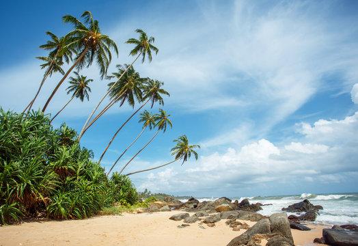 Tropical beach of Sri-Lanka
