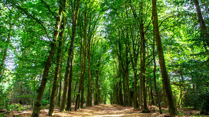 Landscape in dutch forest close to Arnhem