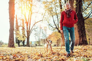 Man with beagle dog walk together in autumn park