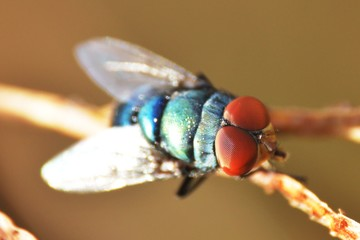 a close up of fly