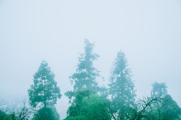tree in green forest with mist