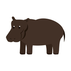Hippo wild animal vector illustration graphic design