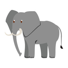 Elephant wild animal vector illustration graphic design
