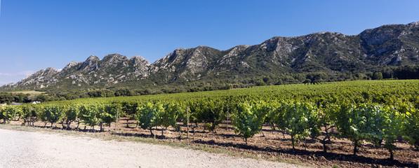 Poster de jardin Afrique du Sud Vineyard in the Les Alpilles Region in St. Remy de Provence. Buches du Rhone, Provence, France..