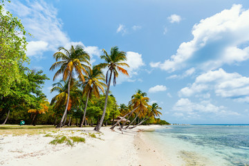 Idyllic beach at Caribbean Wall mural
