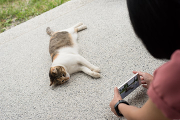 take a picture of a cat