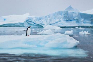 penguin in Antarctica,  wildlife nature, beautiful landscape with icebergs