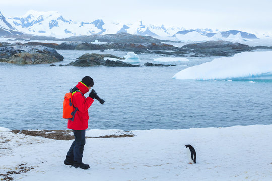 photographer and model, bird wildlife nature photography, tourist taking photo of penguin in Antarctica with big dslr camera and tele lens