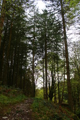 Woodland Forest Trees Background
