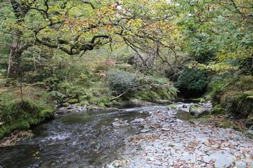 Wild Woodland River