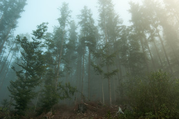 Fotobehang Bos in mist Fog in the forest, Carpathian mountains 5
