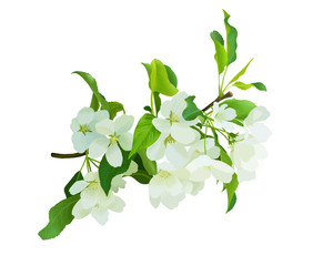 Blooming white flowers