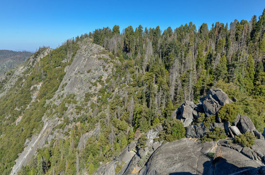 Giant Forest and peaks of High Sierra view from Moro Rock trail Sequoia National Park, California, USA