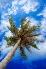 Coconut tree on sky background
