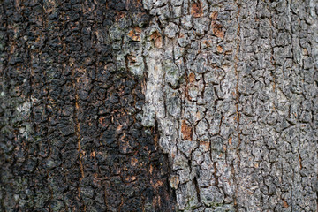 texture of the brown bark of a tree, tree bark texture background