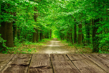 Green forest. The path through the trees