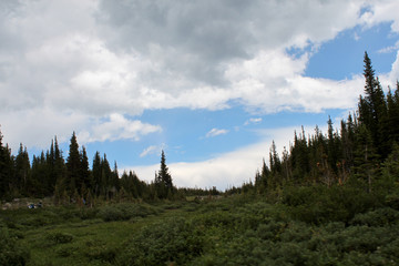 Tress with green meadow and blue cloudy sky