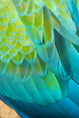 Details of a Macaw feathers