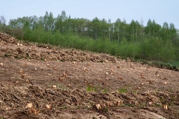 木を伐採された山 / 環境破壊問題のイメージ,