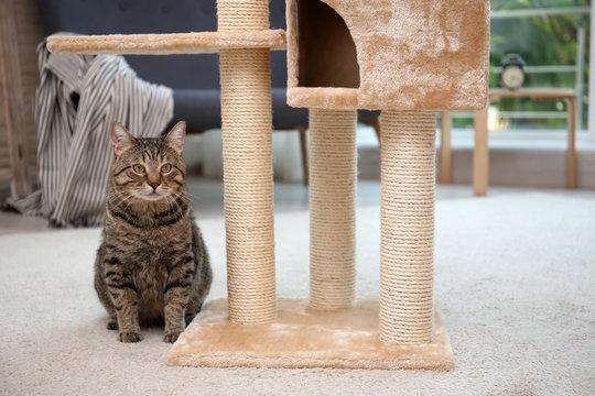 Cute pussycat near cat tree at home
