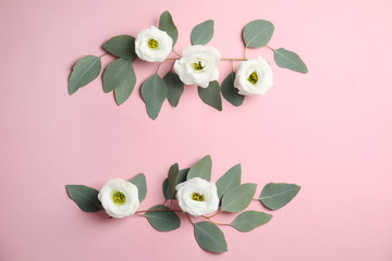 Eucalyptus branches with fresh green leaves and flowers on color background. Flat lay composition with space for design