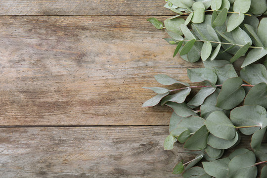 Flat lay composition with fresh eucalyptus leaves and space for design on wooden background