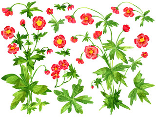 Design set with red anemone flowers and leaves isolated on white. Watercolor cartoon doodle illustration, botanical and fantasy drawings