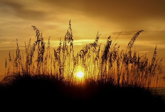 Another Golden Sea Oats Sunset