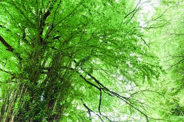 環境イメージ 新緑の大木