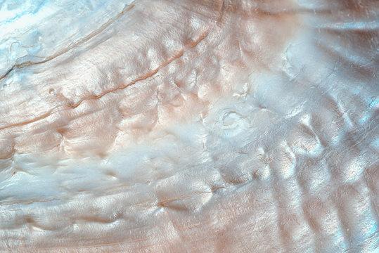 luxury nacre seashell background texture close up