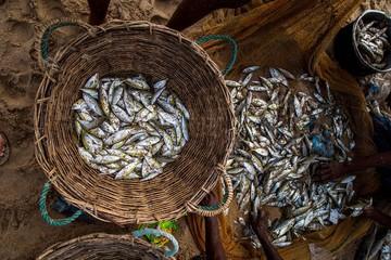 Panier de poissons pêche Sri Lanka