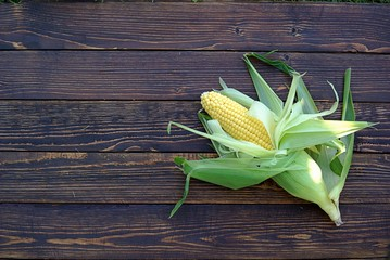 A cob of sweet corn in a husk on a wooden background. Top view, copy space.