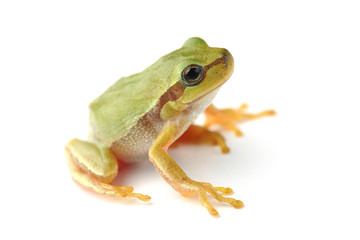 Small tree frog is looking up