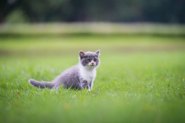 Cute kitten playing on the grass