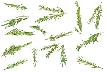 Set of different rosemary branches on a white background, top view.