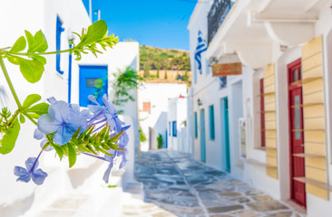Traditional greek street with focus on blue blossoming flower on summer sunny day, Lefkes, Paros...