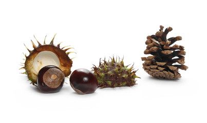 Chestnuts with pine cone isolated on white background