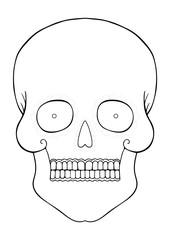 hand-drawn skull contour