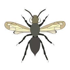 vector, isolated, beetle with wings
