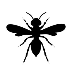 isolated, beetle silhouette black