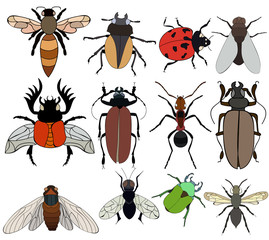 isolated, set of insects, beetles, flies