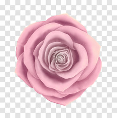 Vector beautiful rose floral decorative element. Photo realistic flower icon on transparent grid background