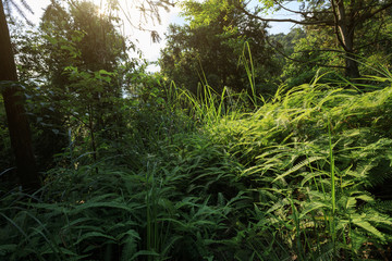 Sunrise in tropical green forest landscape in summer