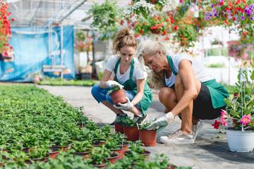 Nursing plants in green house