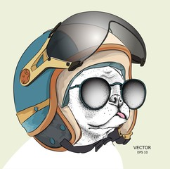 Image Portrait dog in motorcycle helmet. Vector illustration.