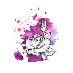 A bright violet formless watercolor blot.  Rose ink flower line graphic