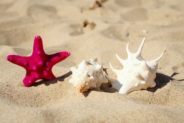holiday background with shells and star on the beach sand in summer