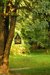 single tree with a bird feeder on a branch in summer forest